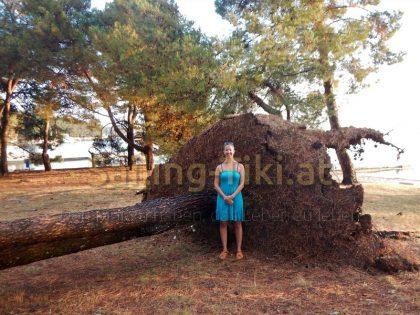 Astrid mit entwurzeltem Baum