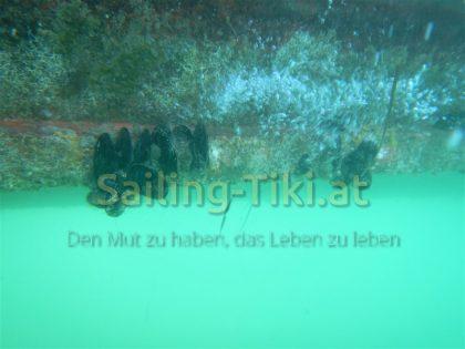 Sirio Unterwasser 2